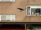 復旦社區冬天的鳥兒:074A7726.JPG