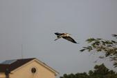 復旦社區冬天的鳥兒:074A7735.JPG