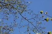 冬至大雪山活潑的鳥兒與松鼠:074A6928.JPG