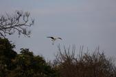 復旦社區冬天的鳥兒:074A7738.JPG