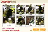 「相簿首選」入選作品:1040426五色鳥.jpg