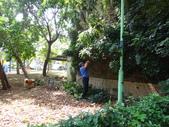 修剪樹籬:DSC09167.JPG