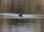 復旦大埤塘的鳥兒:074A7262a.jpg