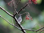 大雪山賞鳥和松鼠及猴王:074A7353a.jpg