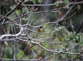 大雪山賞鳥和松鼠及猴王:074A7358.JPG