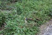 秋天雙溪的昆蟲:074A4783.JPG