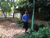 修剪樹籬:DSC09170.JPG