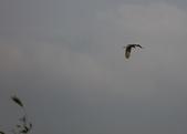 復旦社區冬天的鳥兒:074A7723.JPG