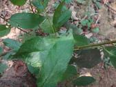 黑巴達姬蜂(雄):DSC02704.JPG