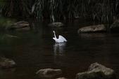 雙溪秋天的鳥類:074A5619.JPG