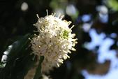 2017春天社區花兒與昆蟲:074A2341.JPG