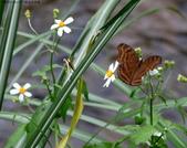 秋天雙溪的昆蟲:074A4787a.jpg