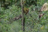 復旦-新天母公園的鳥兒:N74A3639.JPG