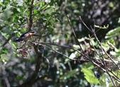 冬至大雪山活潑的鳥兒與松鼠:074A6948.JPG