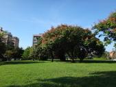 平鎮復興親子公園秋天的花草樹木:DSC05966.JPG