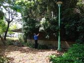 修剪樹籬:DSC09165.JPG