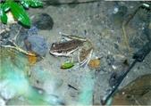 自然界之美一青蛙:2014-04-23 103249.JPG