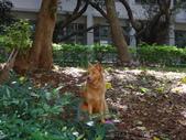 愛犬 Yuni 生活百態 (2015年10月) :DSC00675.JPG