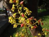 平鎮復興親子公園秋天的花草樹木:DSC06175.JPG