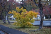 日本賞楓九天Day3--東北-十和田湖~燒山 :IMG_8104.JPG
