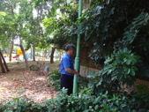 修剪樹籬:DSC09171.JPG