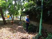 修剪樹籬:DSC09169.JPG