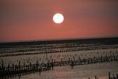 台南沿海生態、鹽田風光與落日:074A4544.JPG