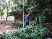 修剪樹籬:DSC09174.JPG