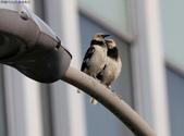 南港鳥兒:074A2401耳提面命.jpg