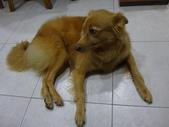 愛犬 Yuni 生活百態 (2015年10月) :DSC01520.JPG