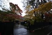日本賞楓九天 Day5--東北-角館清晨與傍晚 :IMG_8565.JPG