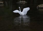 雙溪秋天的鳥類:074A5622.JPG