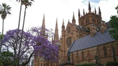 2017雪梨的藍花楹:10585聖瑪莉大教堂.jpg
