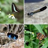 秋天雙溪的昆蟲:相簿封面