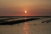 台南沿海生態、鹽田風光與落日:074A4522.JPG