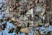 復旦大埤塘的鳥兒:074A7282.JPG