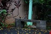 新天母公園的鵲鴝雄鳥:074A5771.JPG
