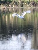 復旦大埤塘的鳥兒:074A7279a.jpg
