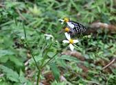 秋天雙溪的昆蟲:074A4783a.jpg