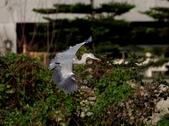 復旦社區冬天的鳥兒:074A7730a.jpg
