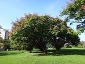 平鎮復興親子公園秋天的花草樹木:DSC05873.JPG