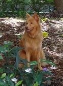 愛犬 Yuni 生活百態 (2015年10月) :DSC00675a.jpg