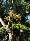 平鎮復興親子公園秋天的花草樹木:DSC06170.JPG