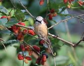 南港鳥兒:074A2376a.jpg