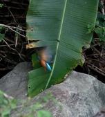 雙溪秋天的鳥類:074A5658.JPG