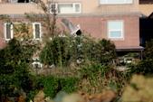 復旦社區冬天的鳥兒:074A7729.JPG