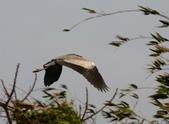 復旦社區冬天的鳥兒:074A7736.JPG