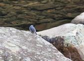 雙溪秋天的鳥類:074A5472.JPG