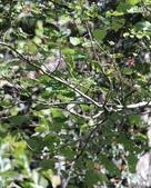 冬至大雪山活潑的鳥兒與松鼠:074A6966.JPG