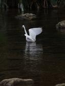 雙溪秋天的鳥類:074A5617.JPG